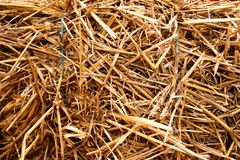 Straw texture for a background Stock Photos