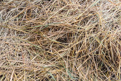 Straw texture and background. Nature royalty free stock image