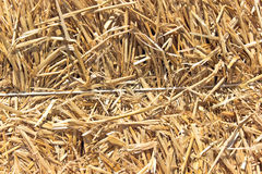 Straw texture background. With rope royalty free stock photos