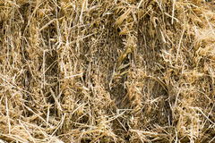 Straw Texture Background Stock Image