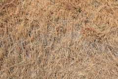 Straw texture background in summer from above. Sunlightn Stock Photos