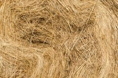 Straw texture. Close-up of golden dry straw stock photo