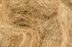 Straw texture. Stock Photo