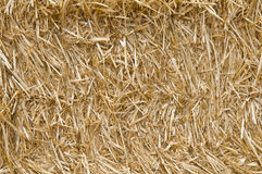 Straw texture. Close up view of straw texture Stock Photos