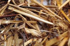 Straw texture closeup. Straw strings closeup abstract background stock image