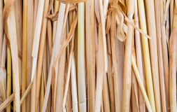 Straw texture collection of vegetable and natural fibers. Foreground stock photo