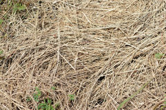 Straw texture. Dry straw grass in a pile stock photo