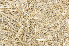 Straw texture. Full image with dry yellow straw royalty free stock image