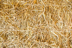 Straw texture. Golden straw texture for background stock photos