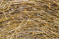 Straw texture. Golden straw texture, close up royalty free stock photo