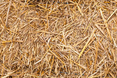 Straw texture. Straw, hay, yellow and dry. Close shot royalty free stock photography