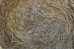 Straw texture in one bunch in a bundle. Straw, background, texture, grass, plant, bale, agriculture, dry, yellow, scene, harvest, nature, wheat, summer, closeup royalty free stock photos