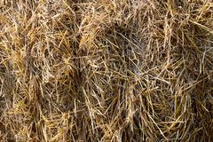 Straw texture in one bunch in a bundle. Straw, background, texture, grass, plant, bale, agriculture, dry, yellow, scene, harvest, nature, wheat, summer, closeup stock images