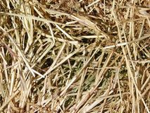 Straw texture outdoors. In the garden stock images