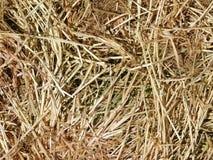 Straw texture outdoors. In the garden stock photos
