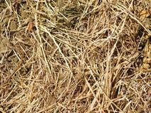 Straw texture outdoors. In the garden royalty free stock images