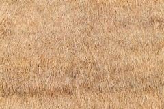 Straw texture. Rice straw roof background and texture stock image
