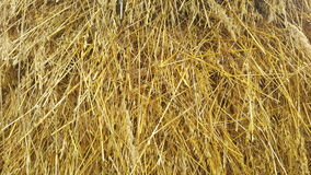 Straw texture ruminants animal food background Royalty Free Stock Photos