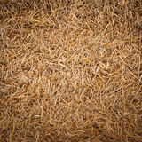 Straw texture Royalty Free Stock Photo