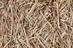 Straw texture, useful for backgrounds Stock Photography