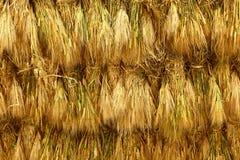 Straw texture Stock Photo