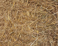 Straw texture. Yellow straw texture in the farm stock photo