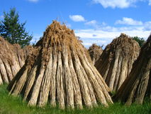 Straw for thatched roofs Royalty Free Stock Photo