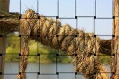 Straw, Tree, Grass Family, Rope stock photos