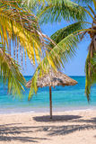 Straw umbrella and palm tree on a beautiful tropical beach. In Cuba Stock Image