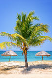 Straw umbrella and palm tree on a  tropical beach. Straw umbrella and palm tree on a beautiful tropical beach Royalty Free Stock Photo