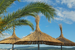 Straw umbrellas and palm leafs on the beach in Montenegro Stock Photos