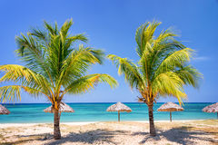 Straw umbrellas and palm trees on a tropical beach Stock Photos
