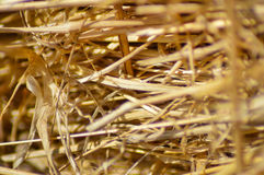 Straw Up Close Stockfotografie