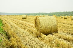 Straw was be picked up and bundled Royalty Free Stock Photos