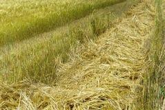 Straw on wheat Royalty Free Stock Photos