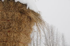 Straw in Winter Stock Photo
