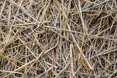 Straw. Stock Images