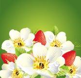 Strawbarry background Royalty Free Stock Photo