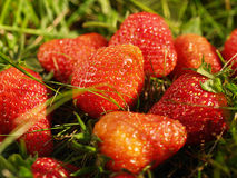 Strawberies Stock Image