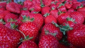 Strawberies Immagini Stock