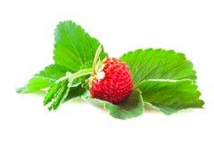 Strawberrie Royaltyfria Foton