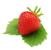 Strawberrie på sidor, isolerad vit bakgrund Royaltyfri Foto