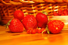 Strawberries. On the table, wild and regular royalty free stock photo