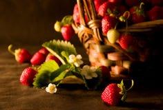 Strawberries (1). Fresh strawberries in a basket Stock Image