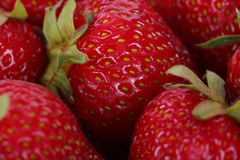 Strawberries. Ripe red strawberries close up royalty free stock photography