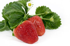 Strawberries. Red ripe strawberries with leaves and flower on white background Stock Image