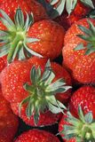 Strawberries. This is a close up of many peoples favourite summer fruit - juicy red ripe strawberries Stock Photography