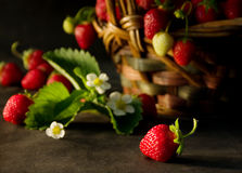 Strawberries (2). Fresh strawberries Stock Photography