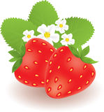 Strawberries. Vector strawberries with leaves and flowers Royalty Free Stock Image