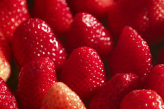 Strawberries. Lined together to be served Stock Photos